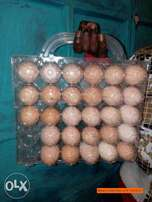 Eggs Packaging Tray
