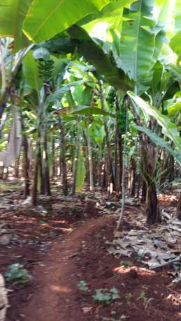 Maragwa a prime 2 acres with banana and trees Mbugua - image 2