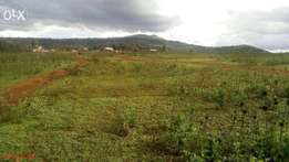 1/8 acre plots in Ngong (Baboon Crescent)