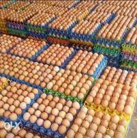 Fresh jumbo size eggs