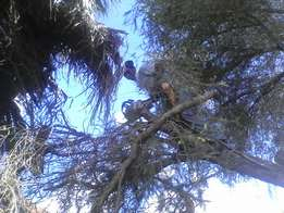 TREE FELLING, TRIMMING , SITE CLEARANCE, pruning , stump removal etc