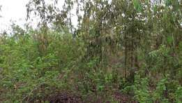 Nyamindi river, Kirinyaga: 21 Acres full of coffee and trees