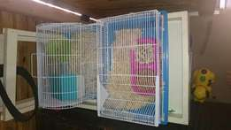 Hamsters with cages