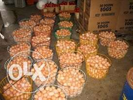 bulky create of eggs at a give away price Lagos Mainland - image 1