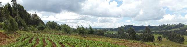6 Acre Prime Land for sale in Ol Kalou, Nyandarua Nairobi CBD - image 3