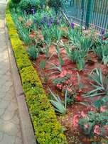 Landscaping works (flowers,trees,redsoil,manure etc)