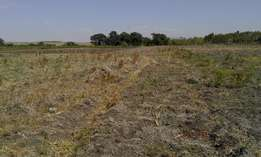 Mwalimu farm 3 acres on sale