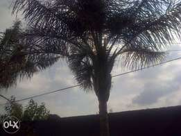 Tree fellings and Garden services in Gauteng