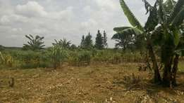 30 acres of land in kikyusa kabunyata