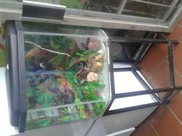 Fish tank with a stand