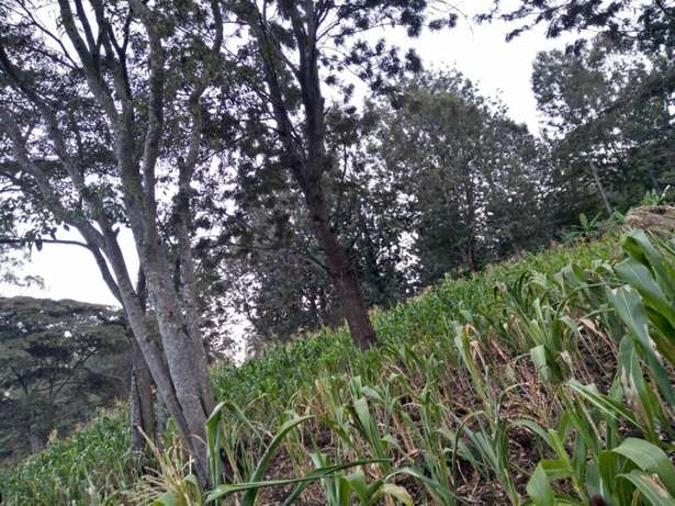 Land in Matasya Ngong, 8 Acres for sale Parklands - image 1