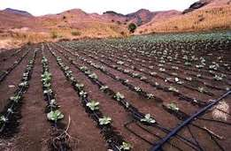 Drip irrigation & Rain Water harvesting,drip installation 120,000/Acre