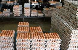 Farm Fresh Chicken Table Eggs Brown and White