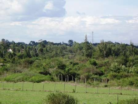 Prime ½ Acre Land For Sale In Karen Karen - image 3