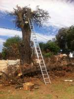 Tree Felling and Site Clearing