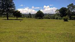 Prime 2 parcels of ½ acre are on Quick sale near Ngorongo tea