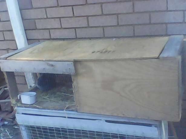 Rabbits and cage for sale Brits - image 3