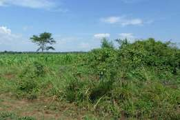2 acres ofland in bombo near janan school