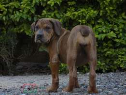 Puppies looking for a new home