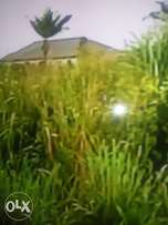 100/200 plots of land for sale