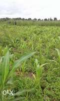 2 Full Plots of Land For Sale in Kaduna
