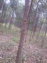 Land and trees for sale
