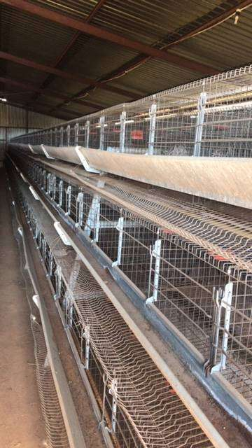 Chicken Cage - Classified ads in Farming & Industrial | OLX