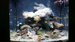 Saltwater marine aquarium fish tank