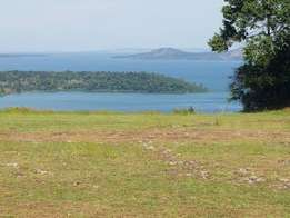 42acres with lake view in Buikwe Ssi Muvo at 4M per acre.