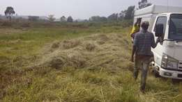 animal grass for sale