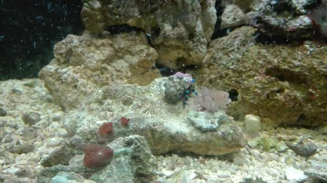marine tank with breeding lair of clowns full setup Mitchell's Plain - image 2
