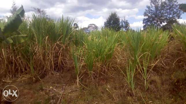 1 Acre land FOR SALE With a THREE bedroom house in Trans-Nzoia County Sinyerere - image 3