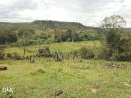 8 acres of fertile land for lease next to a permanent river.