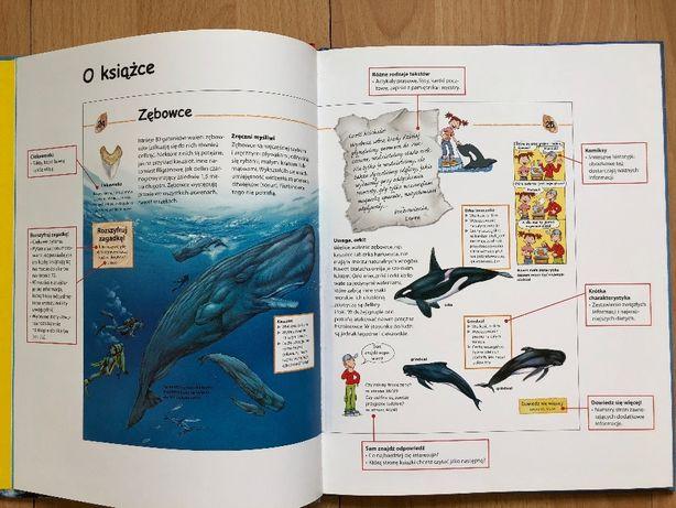38c3656c8850d1 młody odkrywca rekiny, delfiny i wieloryby MAK 2008 Pruszków - image 5