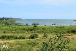 2000 acres of millo land on sale in Bale-bugerere each acre is at 2,5m