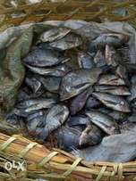 Fresh tilapia fish from Lake Victoria and Lake Kyoga