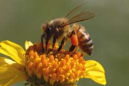 Bee Removals Gauteng