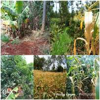 1/2 an acre at Kenol town, Murang'a county. Prime area, approx 2.2 km