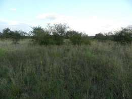 3.1 Hectare stand for sale in Buffelsdrift