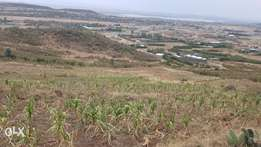 50ft x 100ft plots for sale in Gilgil Kikopey area