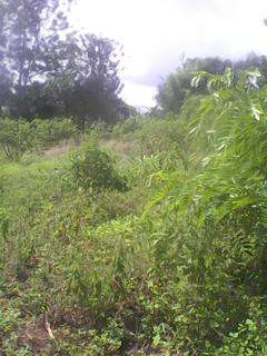 Sale of aquarter piece of land at MUGOYA 200m from the station Embu Town - image 3