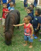 ponies for all event hire