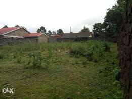 Kenya safehomes 1/4 plot for sale in Kiamunyi oliveinn.