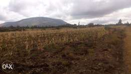 50X100 Plots for sale Kamulu Malaa.