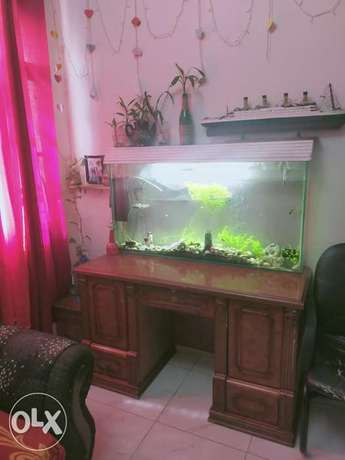 Aquarium for sale with fishes , stones and complete accessories