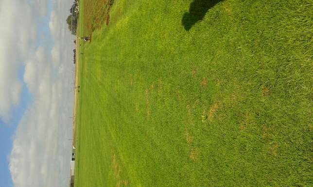 Evergreen instant lawn suppliers Mooikloof - image 1