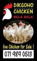 Live Chickens For Sale