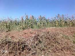 1acre on sell with title deed