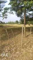 One acre for sale in Eldoret