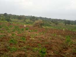 3.61 Acres of Agriculture Land for quick sale in wobulenzi at 15m onl
